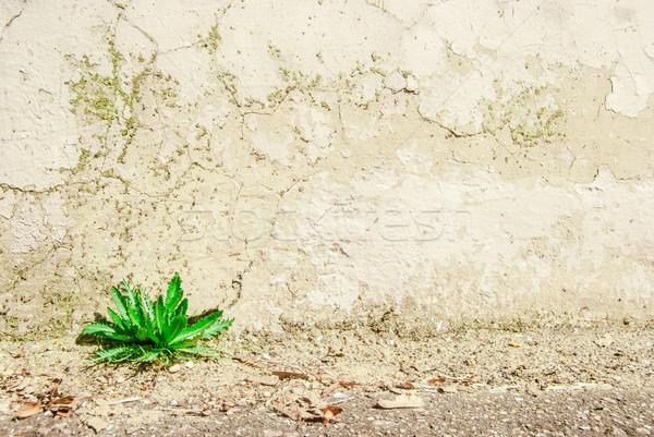 старые стены зеленый завода углу трава Сток-фото © Romas_ph