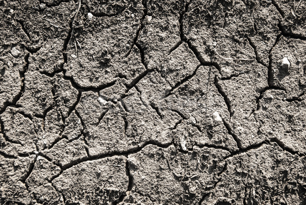 Cracked lifeless soil drying under ardent sun, macro Stock photo © Romas_ph