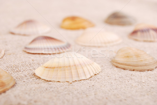 Seashells on the old textile. Textured background for nautical themes, sea travel, and vacation. Stock photo © Romas_ph