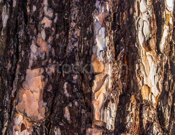 Fatörzs textúra fa fa természet terv Stock fotó © Romas_ph