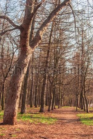 парка весны пути деревья трава древесины Сток-фото © Romas_ph