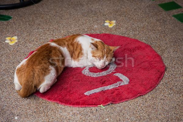 Kot miłości czerwony dywan słowo Tajlandia Zdjęcia stock © romitasromala