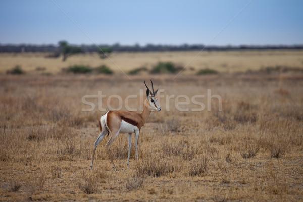 Afryki pustyni Botswana charakter niebieski kobiet Zdjęcia stock © romitasromala