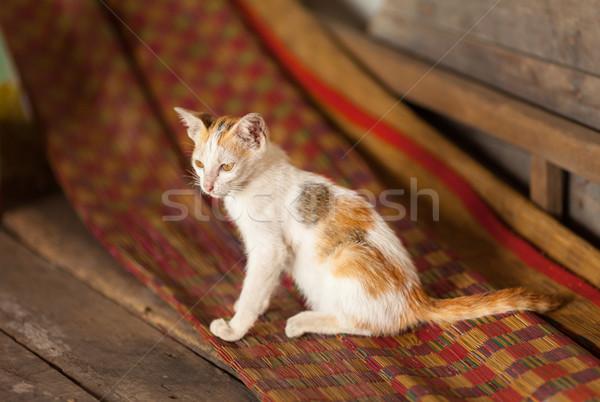 Kotek wiejski Wietnam tradycyjny domu Zdjęcia stock © romitasromala