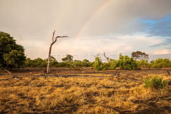 Krajobraz Botswana tęczy dramatyczny południowy Afryki Zdjęcia stock © romitasromala