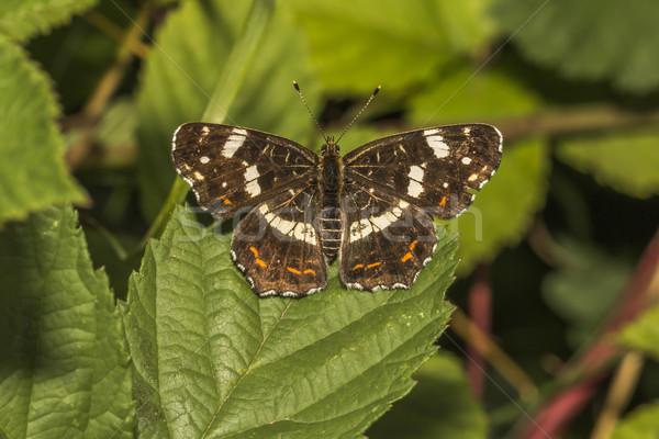 Kaart vlinder vergadering bloem boom gras Stockfoto © Rosemarie_Kappler