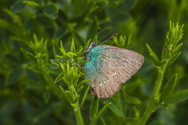 Groene vergadering tak boom gras vlinder Stockfoto © Rosemarie_Kappler