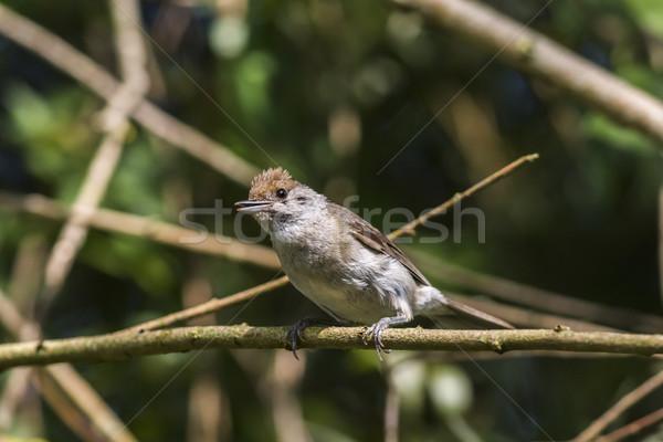 Natuur vogel veer dier vergadering wildlife Stockfoto © Rosemarie_Kappler