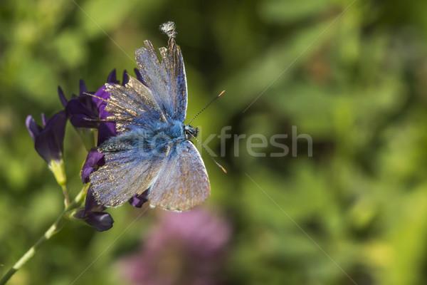 синий сидят колокола дерево трава бабочка Сток-фото © Rosemarie_Kappler
