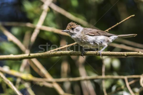 Nature oiseau plumes animaux séance faune Photo stock © Rosemarie_Kappler