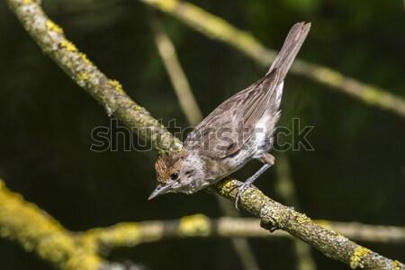 природы птица Перу животного сидят живая природа Сток-фото © Rosemarie_Kappler
