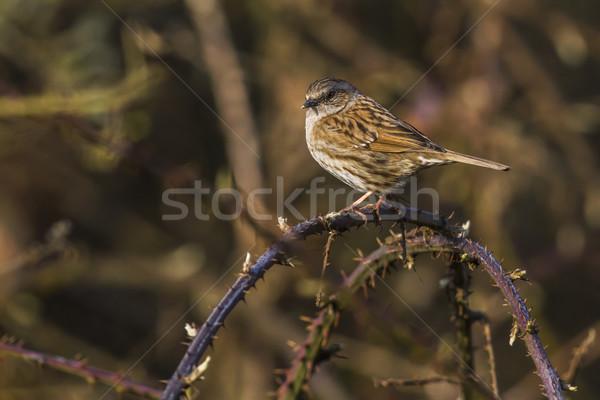 Vergadering tak boom landschap vogel vogels Stockfoto © Rosemarie_Kappler