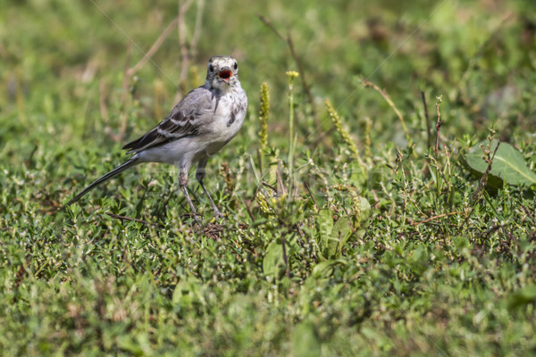 Blanco búsqueda paisaje aves pluma animales Foto stock © Rosemarie_Kappler