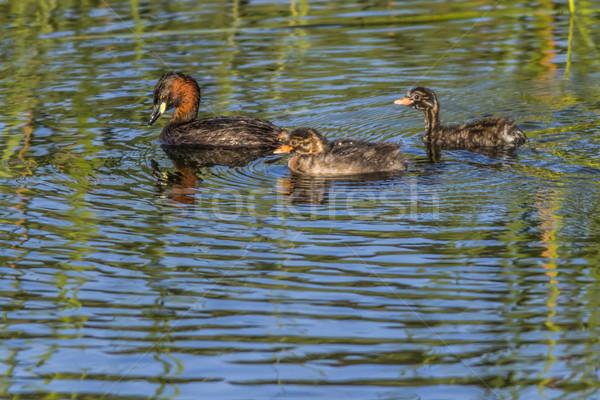 Vijver zoeken water natuur landschap outdoor Stockfoto © Rosemarie_Kappler