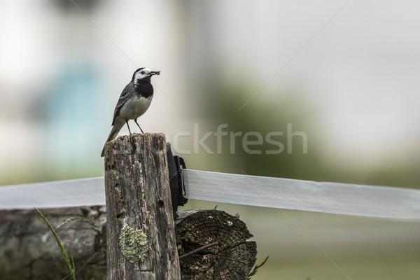 Witte landschap vogel veer dier outdoor Stockfoto © Rosemarie_Kappler