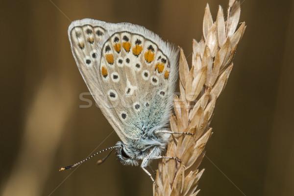 Kék ül virág természet levél levegő Stock fotó © Rosemarie_Kappler