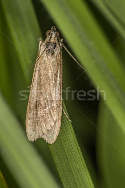 Haast vergadering boom gras vlinder vleugels Stockfoto © Rosemarie_Kappler