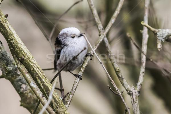 Séance branche nature paysage oiseau plumes Photo stock © Rosemarie_Kappler