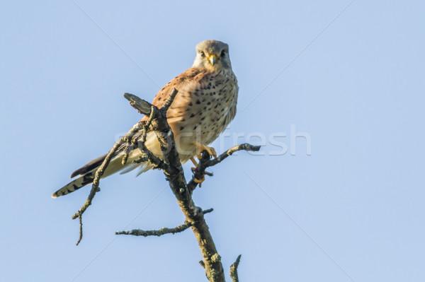 сидят птица Перу животного посмотреть Открытый Сток-фото © Rosemarie_Kappler
