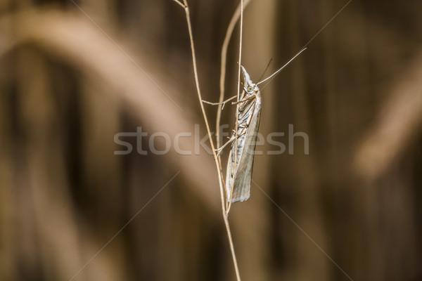 Saten çim oturma ağaç kelebek kanatlar Stok fotoğraf © Rosemarie_Kappler