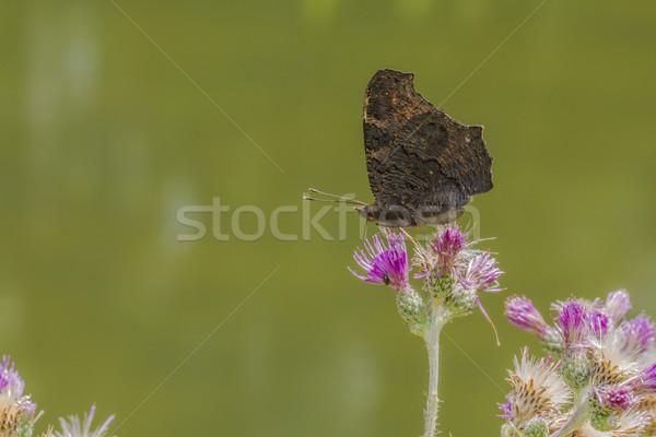 Klein boom gras vlinder vleugels weide Stockfoto © Rosemarie_Kappler