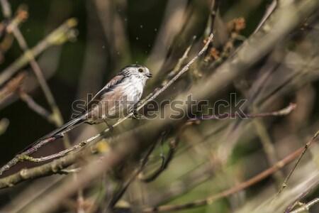 Vergadering tak natuur landschap vogel veer Stockfoto © Rosemarie_Kappler