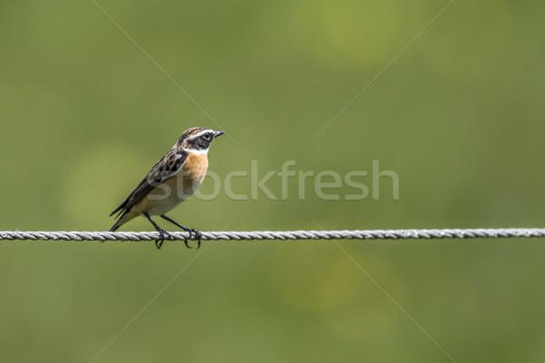 сидят туго натянутый канат лес природы птица филиала Сток-фото © Rosemarie_Kappler