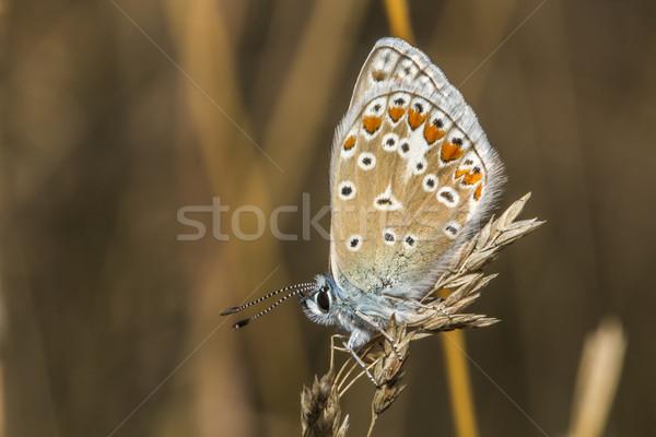 Foto stock: Azul · sessão · árvore · grama · borboleta · asas