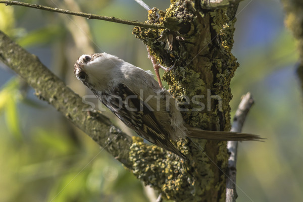 Paisagem pássaro pena animal sessão Foto stock © Rosemarie_Kappler