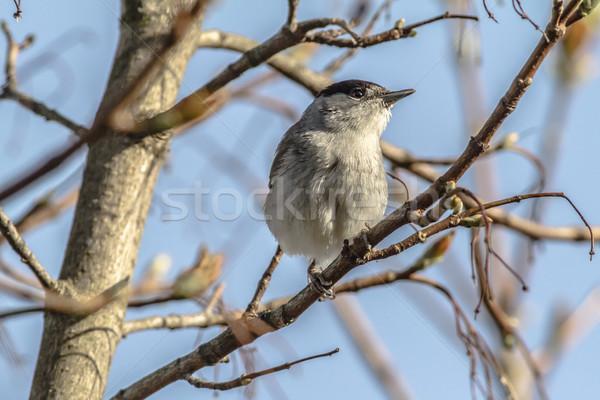 Sessão ramo paisagem pássaro pena animal Foto stock © Rosemarie_Kappler