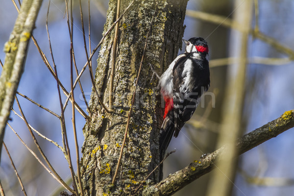 Groot vergadering boom stam landschap vogel Stockfoto © Rosemarie_Kappler