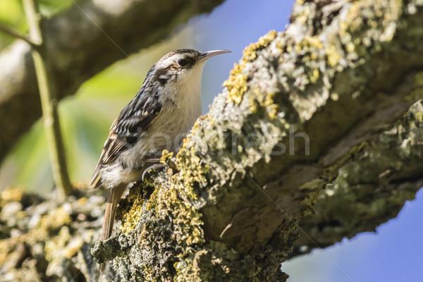 Zoeken landschap vogel veer dier vergadering Stockfoto © Rosemarie_Kappler