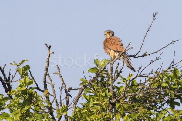 Punt zoeken vogel veer dier kijken Stockfoto © Rosemarie_Kappler