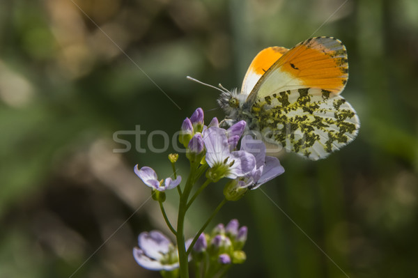 Oranje boom gras vlinder vleugels weide Stockfoto © Rosemarie_Kappler