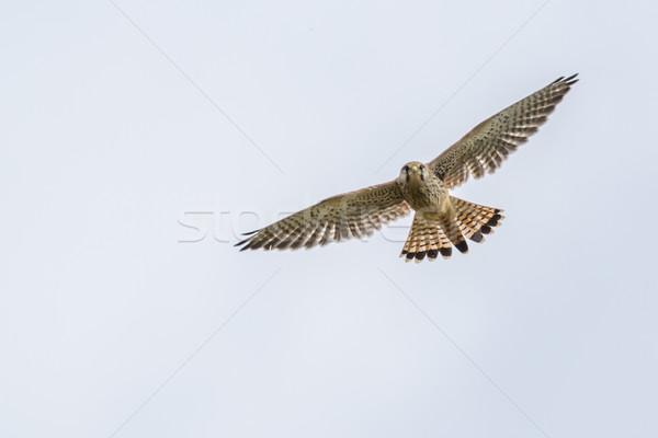 Vergadering vogel veer dier kijken outdoor Stockfoto © Rosemarie_Kappler