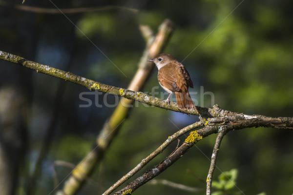 кустарник сидят филиала пейзаж птица Перу Сток-фото © Rosemarie_Kappler