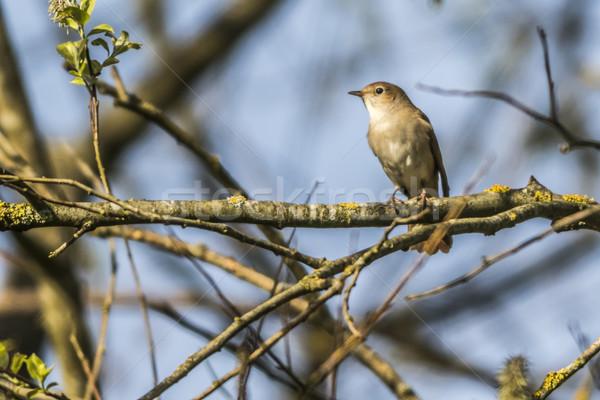 Heester vergadering tak landschap vogel veer Stockfoto © Rosemarie_Kappler