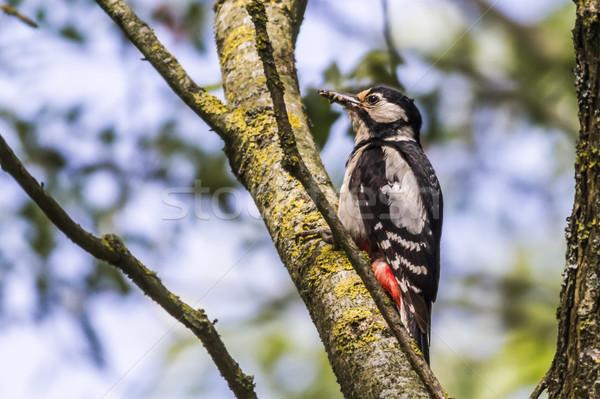 Muhteşem oturma ağaç ağaç gövdesi doğa manzara Stok fotoğraf © Rosemarie_Kappler