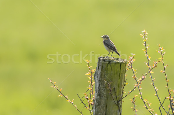 Natuur landschap vogel veer dier vergadering Stockfoto © Rosemarie_Kappler