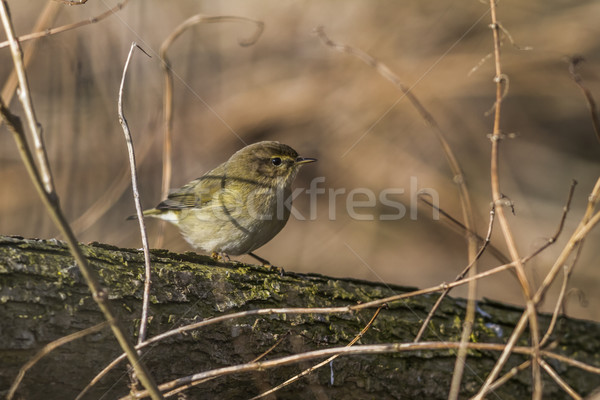 Vergadering tak boom bos natuur vogel Stockfoto © Rosemarie_Kappler