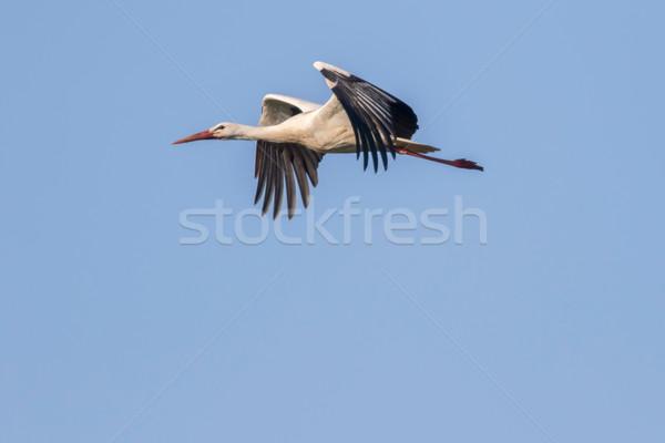 Fehér gólya égbolt természet kék madarak Stock fotó © Rosemarie_Kappler
