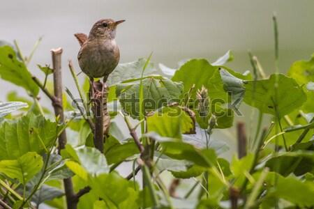 Weinig zoeken landschap vogel veer dier Stockfoto © Rosemarie_Kappler