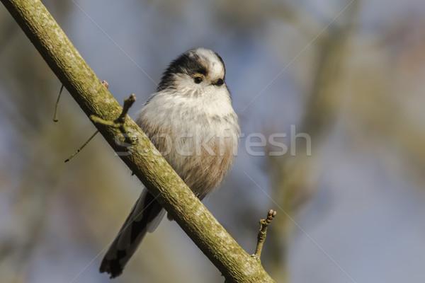 売り言葉 座って 支店 風景 鳥 肖像 ストックフォト © Rosemarie_Kappler