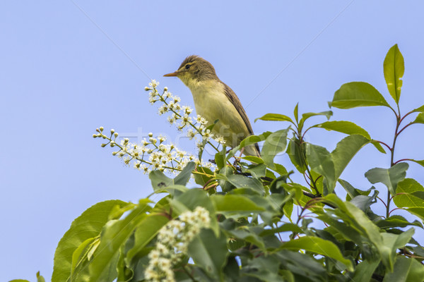 Zingen landschap vogel veer dier outdoor Stockfoto © Rosemarie_Kappler