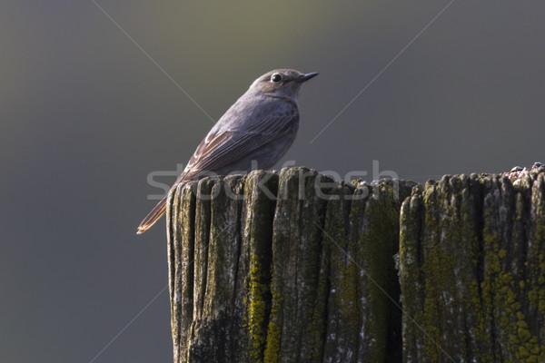 черный поиск пейзаж птица Перу животного Сток-фото © Rosemarie_Kappler
