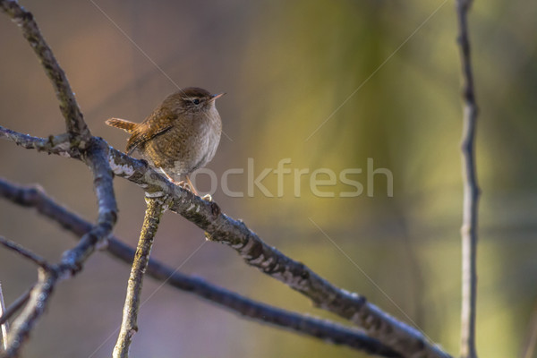 мало поиск пейзаж птица Перу животного Сток-фото © Rosemarie_Kappler