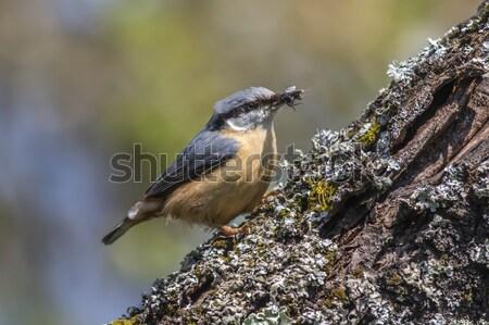Vergadering boom natuur vogel portret tak Stockfoto © Rosemarie_Kappler