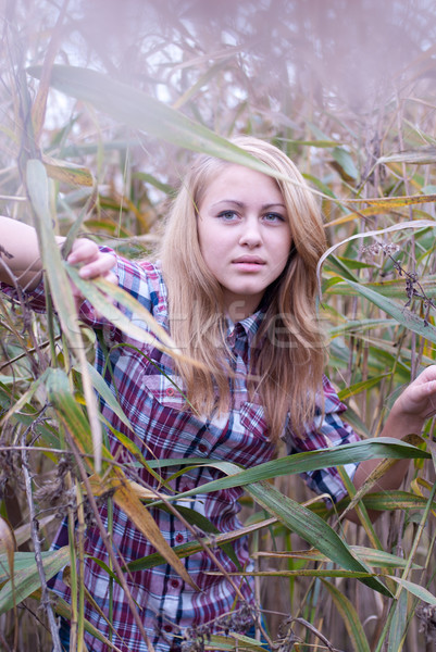 Closeup of young beautiful blond woman in reed Stock photo © rosipro