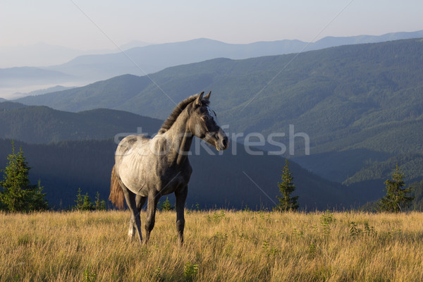 Beautiful morning landscape with the young horse Stock photo © rozbyshaka