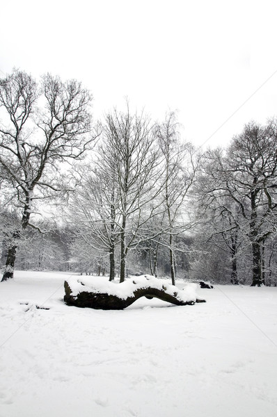 Fallen tree trunk covered in snow Stock photo © RTimages